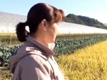 農業をやってる田舎のおばさん狙いでナンパした結果!その日のうちに中出し射精